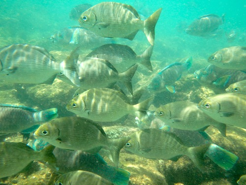 Whale's Tail Snorkel Tour Fishes