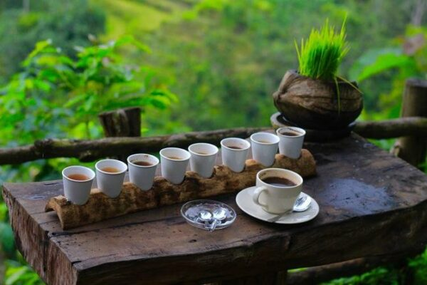 Luwak Coffee Plantation Ubud